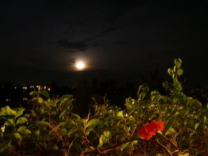 22日満月