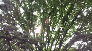 皇居の木漏れ日